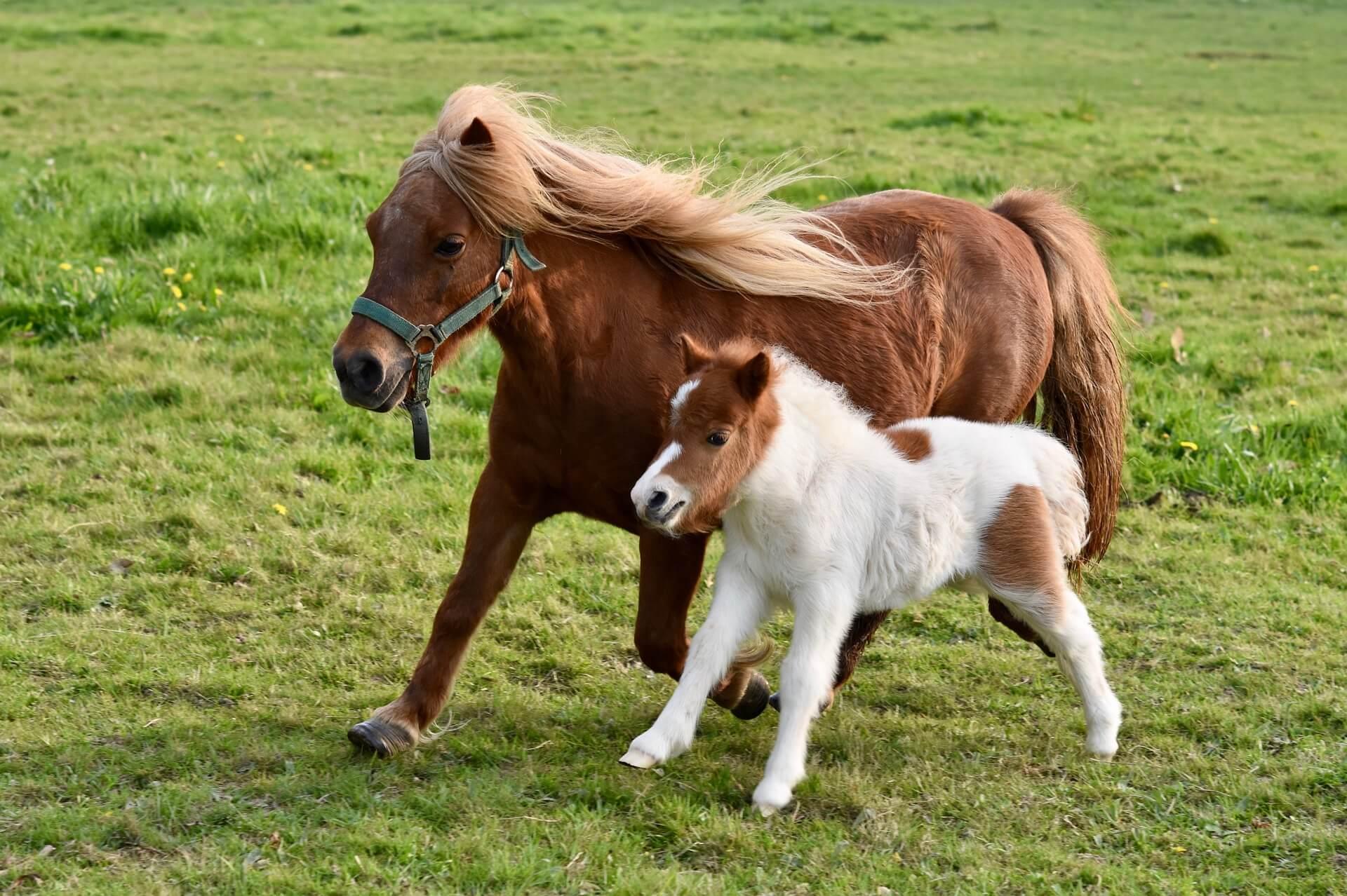 乗馬用品・馬具買取バナー画像